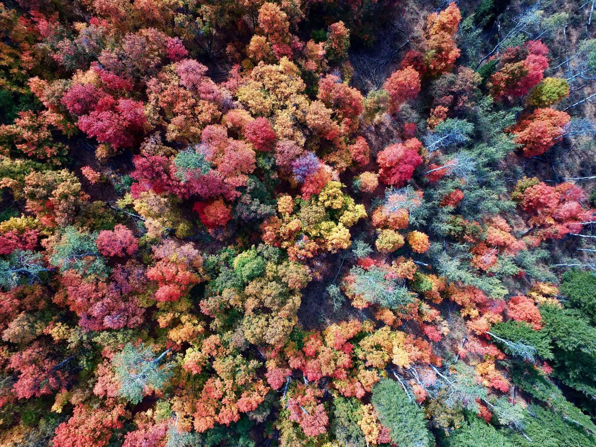 Der Herbst In Kanada Ein Festival Fur Die Augen Kanadastisch