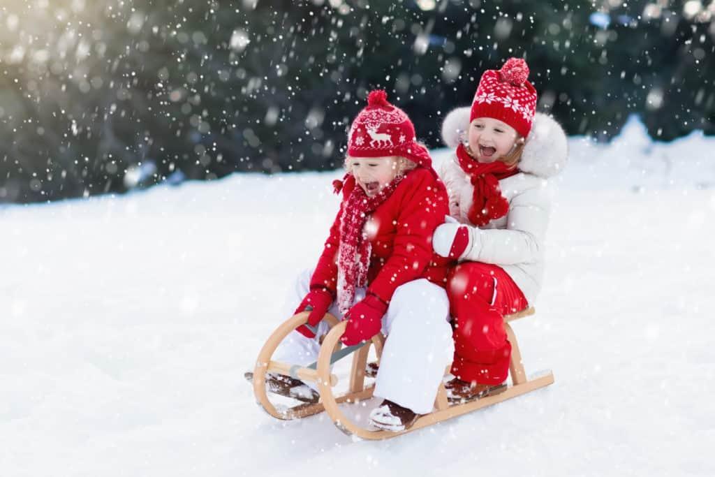 Rinder haben Spaß auf einem Schlitten im Schnee