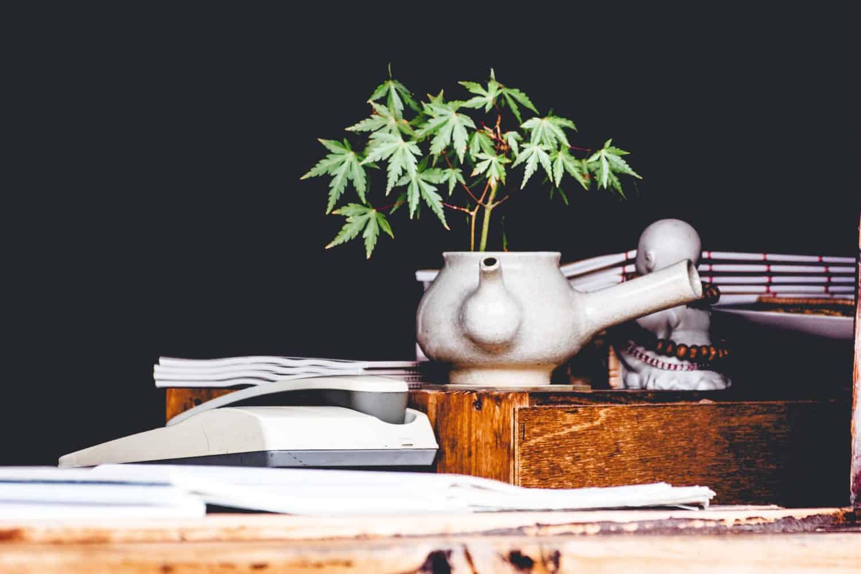 Cannabis Pflanze auf Schreibtisch