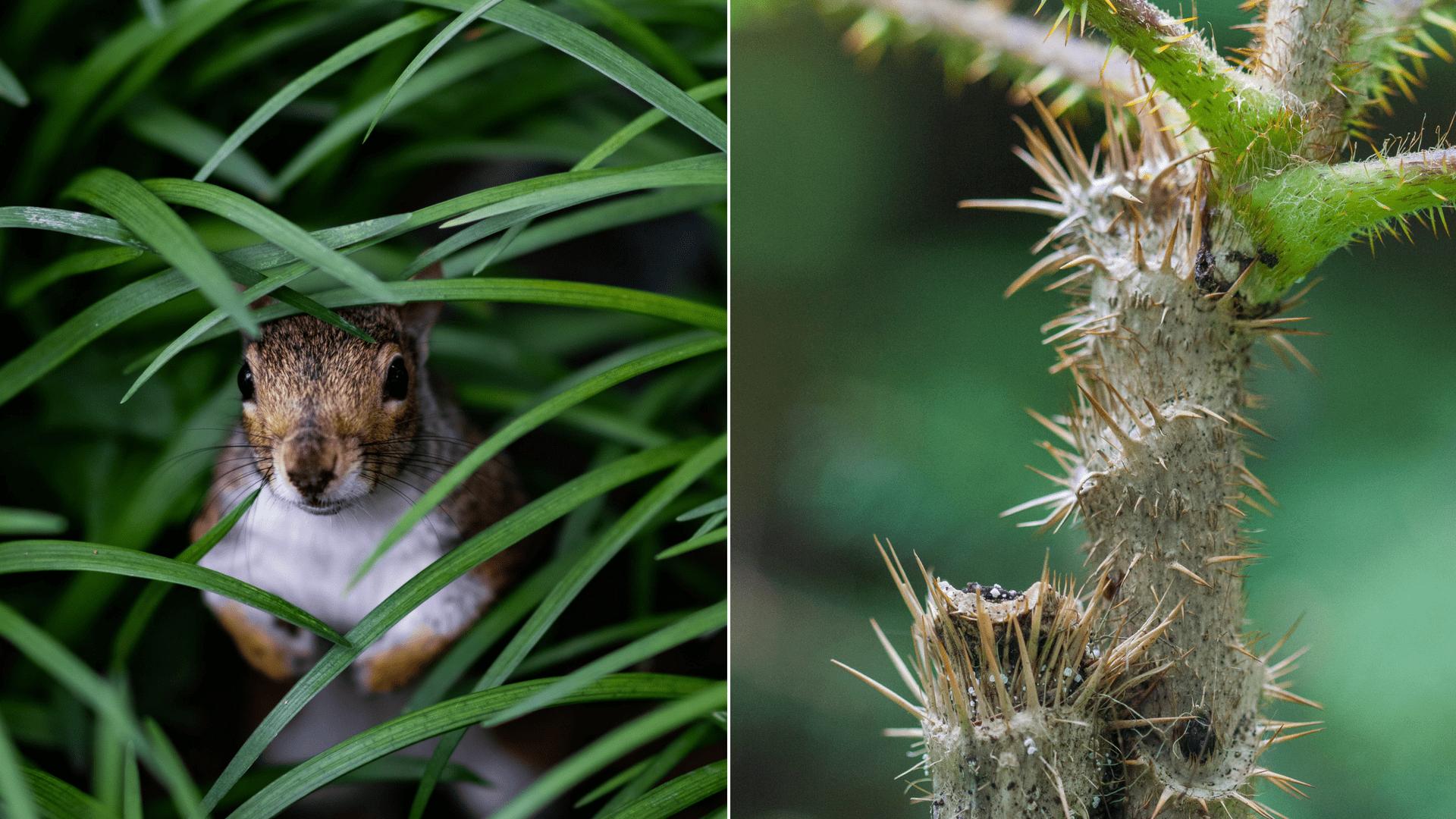 Nahaufnahmen Natur im Nationalpark, Pflanze und Tier