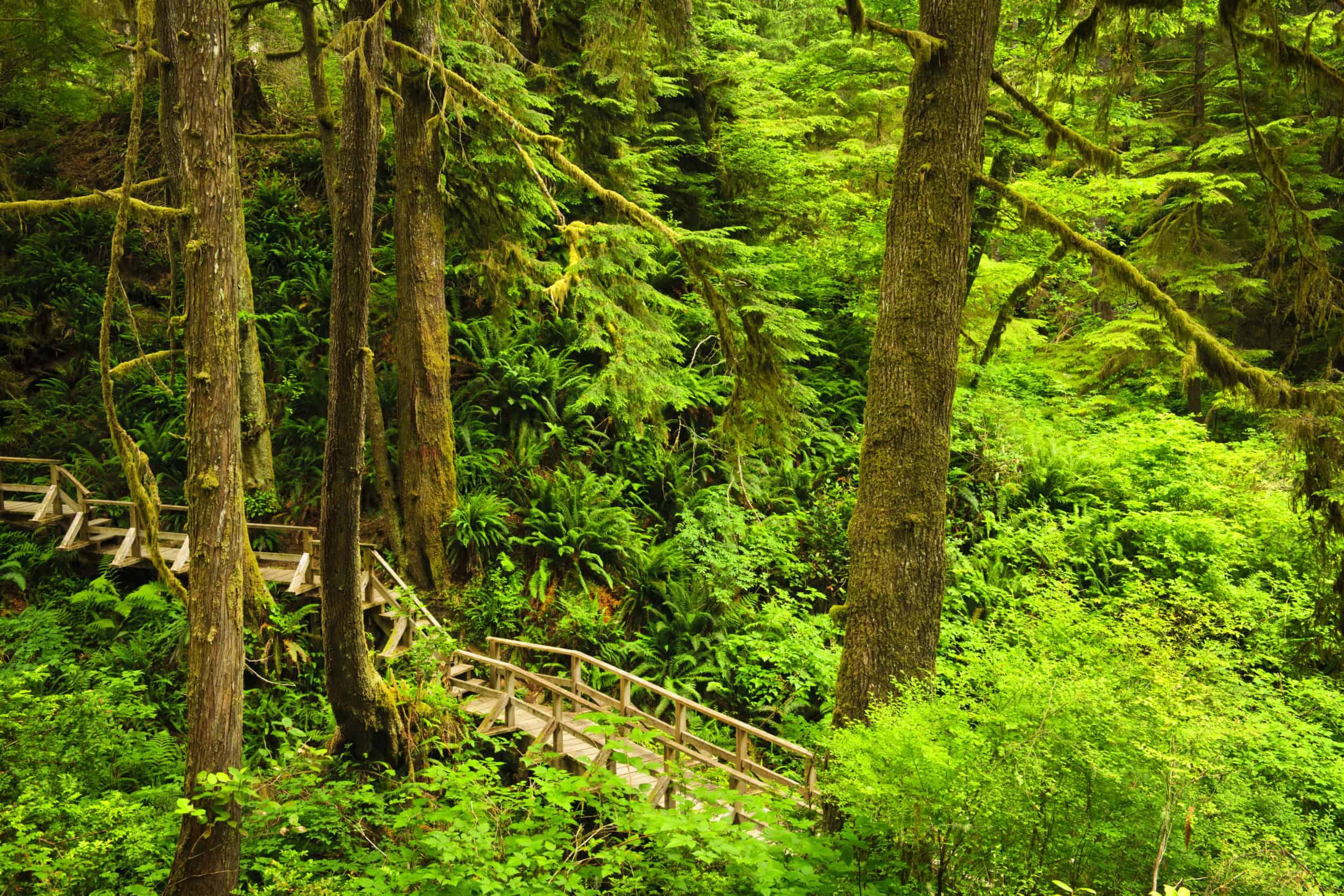 Kleiner Pfad führt durch den dichten Regenwald des Pacific Rim Nationalparks