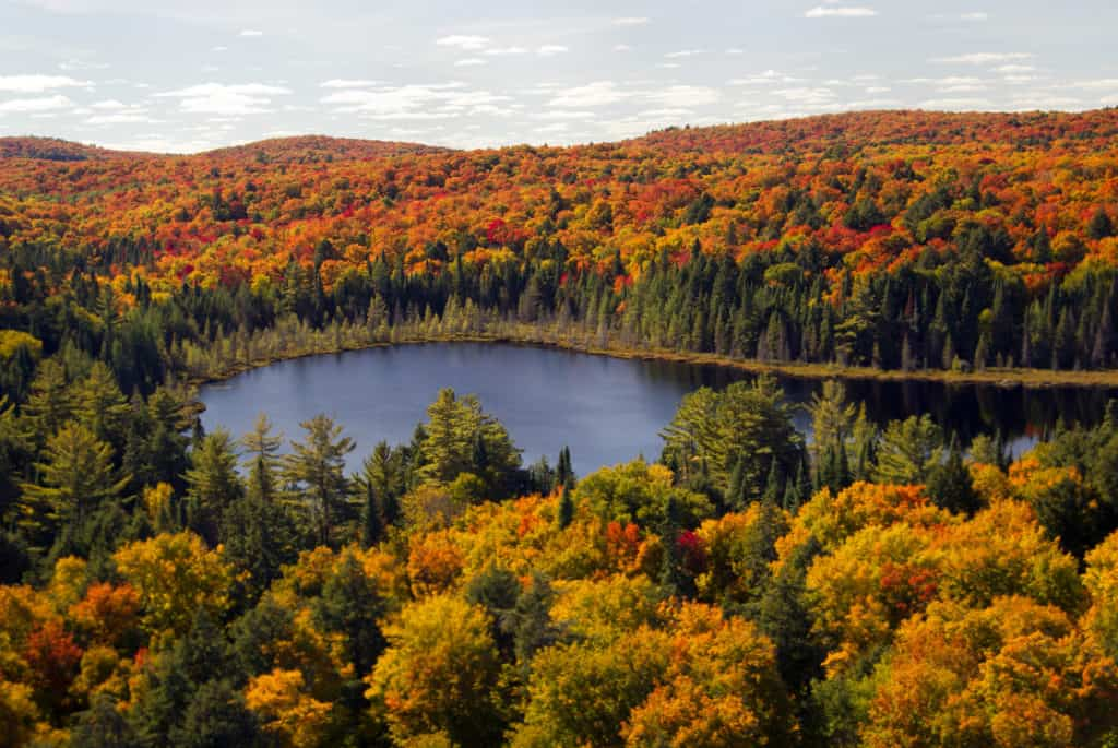 Indian Summer im Algonquin Provincial Park
