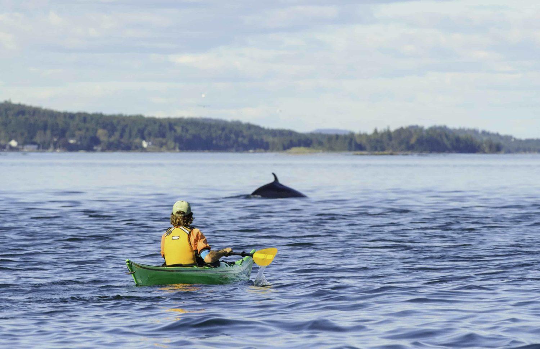 Kanutour mit Delfin in New Brunswick, Kanada