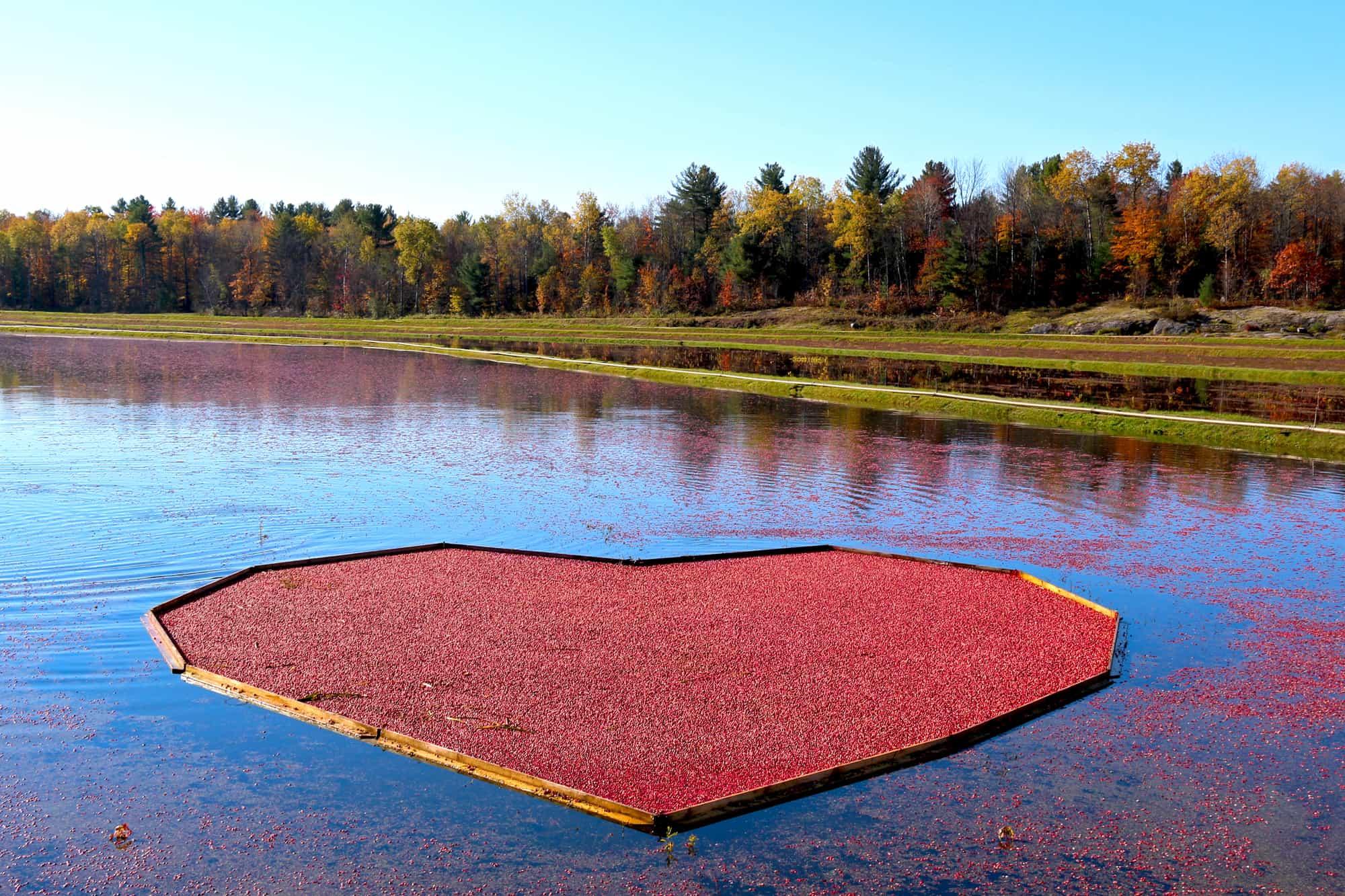 Ein Herz aus Cranberries