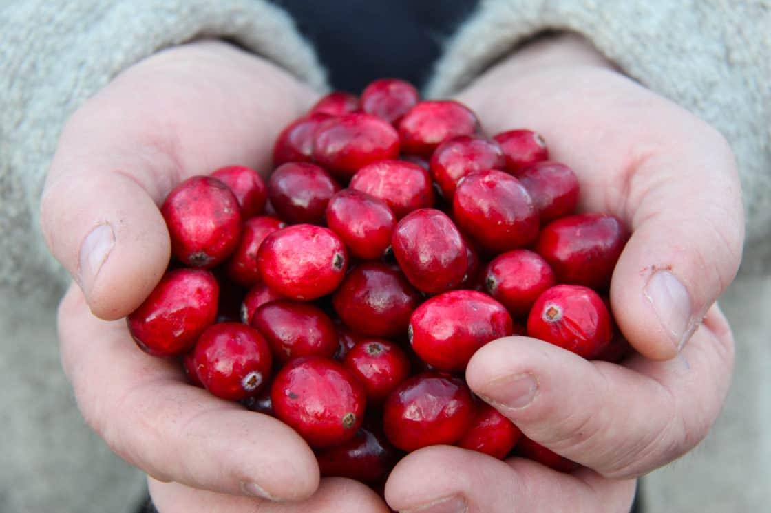 Eine Handvoll Cranberries