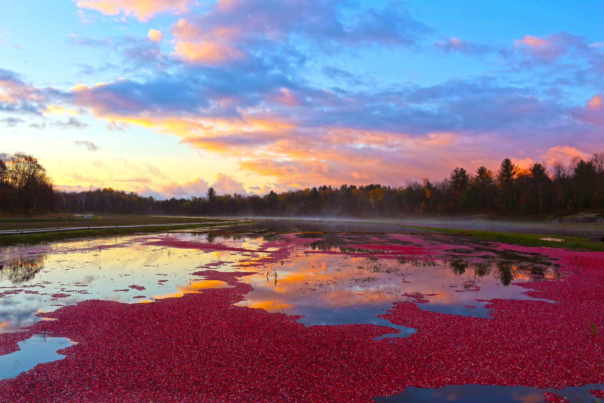 Sonnenuntergang über Cranberry Feldern