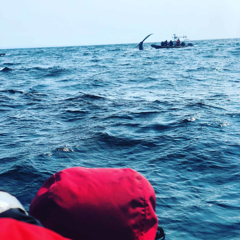 Whale watching in Trinity Neufundland