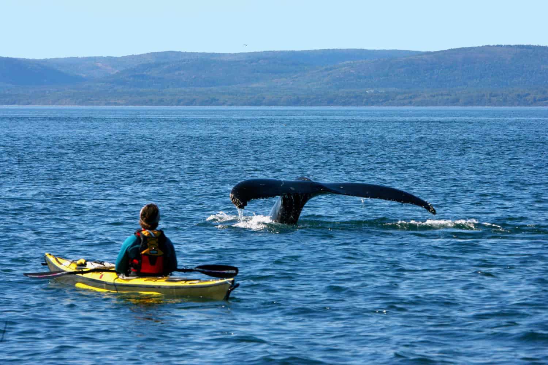 Wal Flosse im Wasser, Man mit gelben Kanu