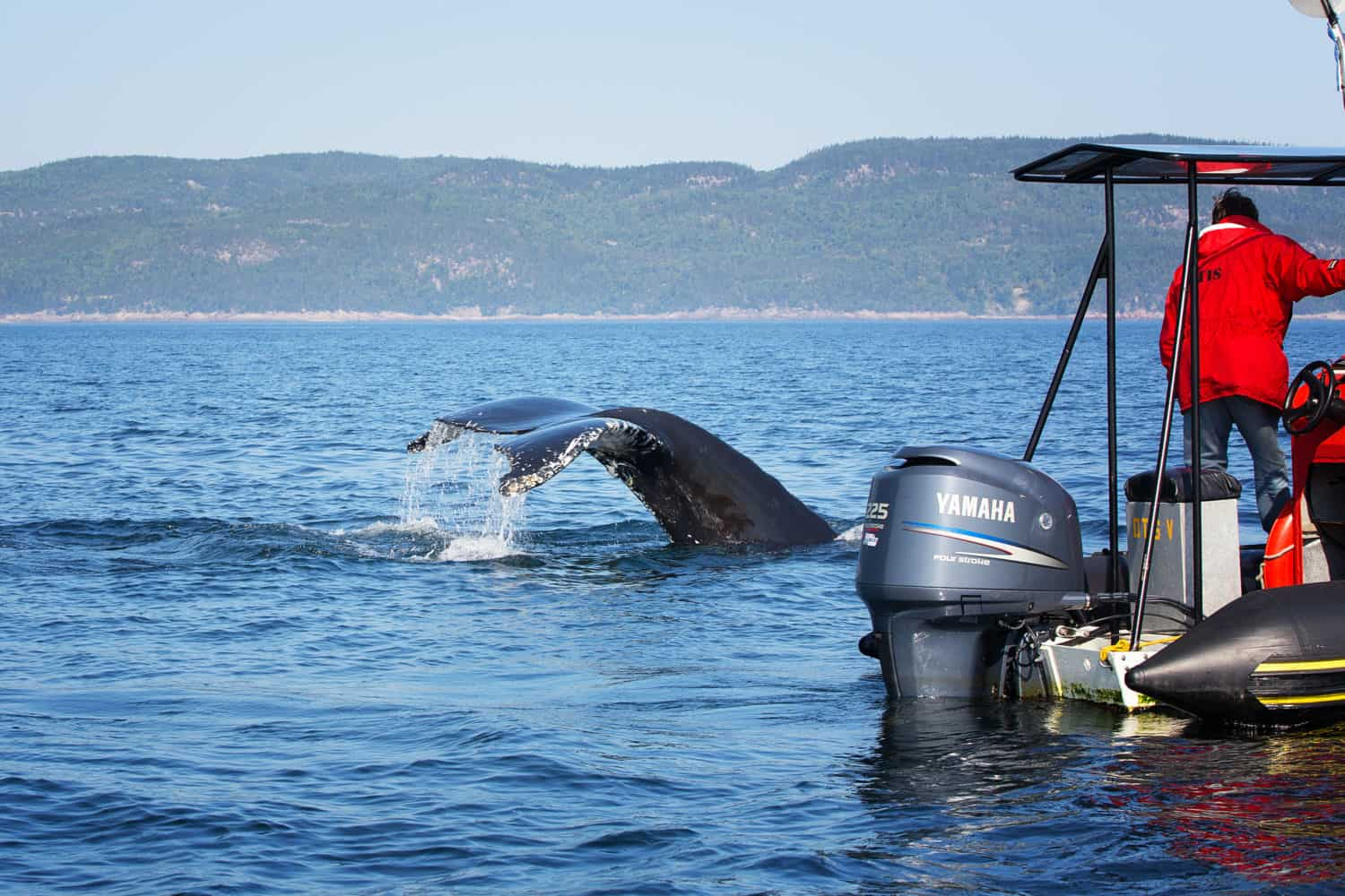 Tadoussac, Quebec, Whale Watching