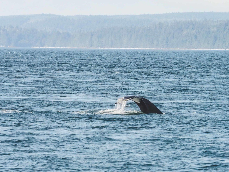Walflosse im Wasser