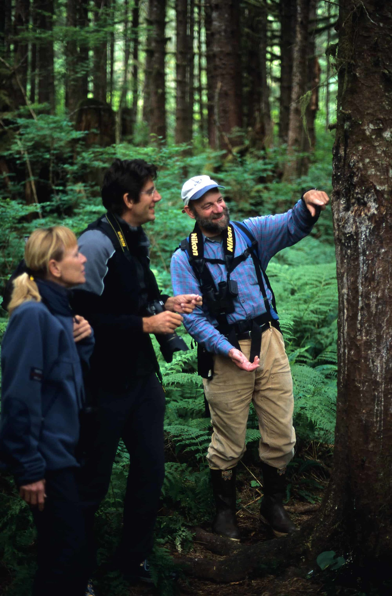 Die Spuren der Grizzlybären an den Bäumen werden während einer Regenwaldwanderung von Great Bear Nature Tours erklärt.