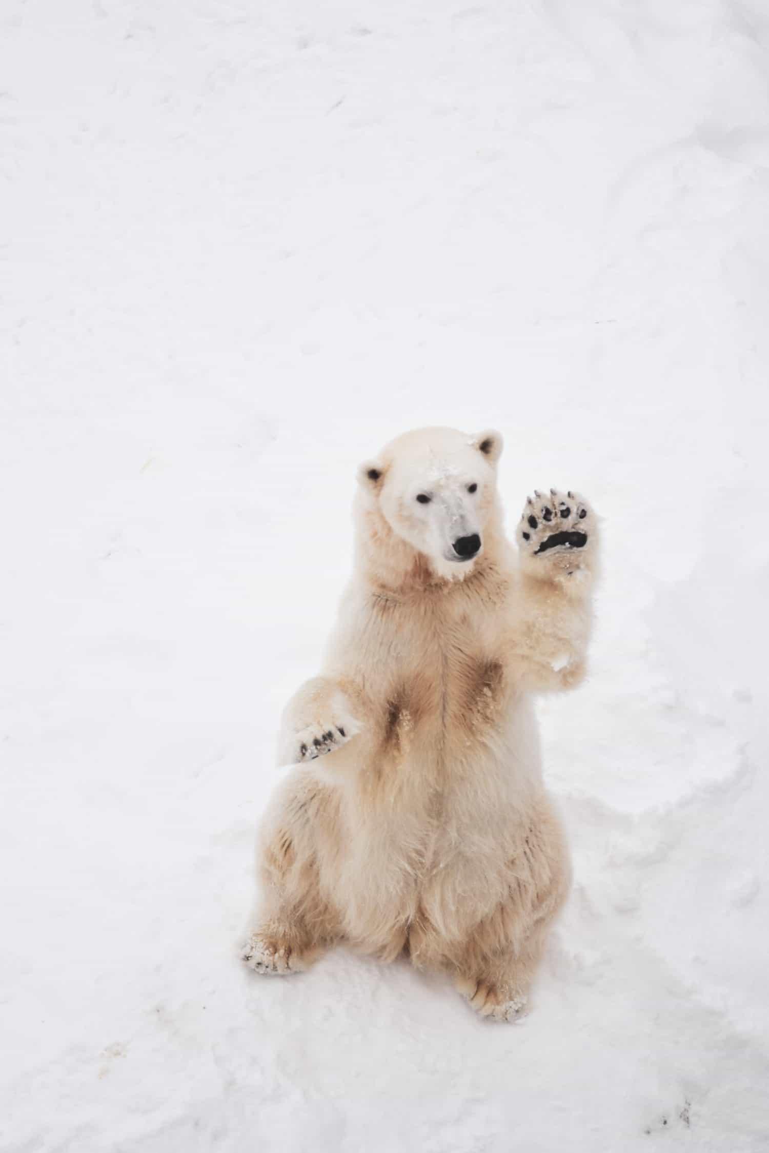 Am winkenden Eisbär vorbei paddeln