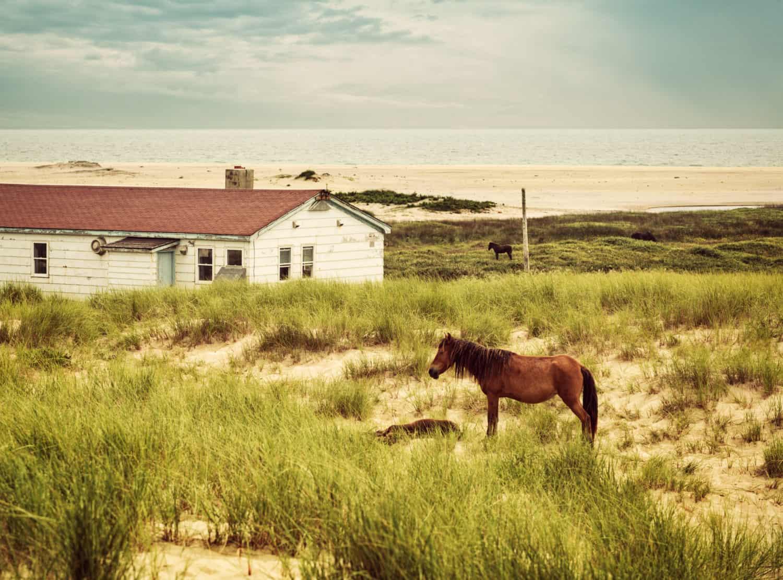 Wildpferd von Sable Island vor einem Haus inmitten von Gras und Sand