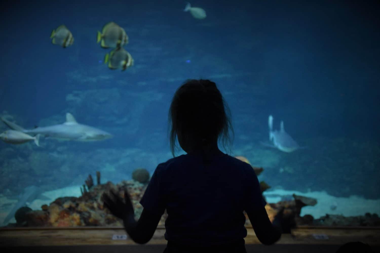 Kind steht vor dem Aquarium voller Fische.