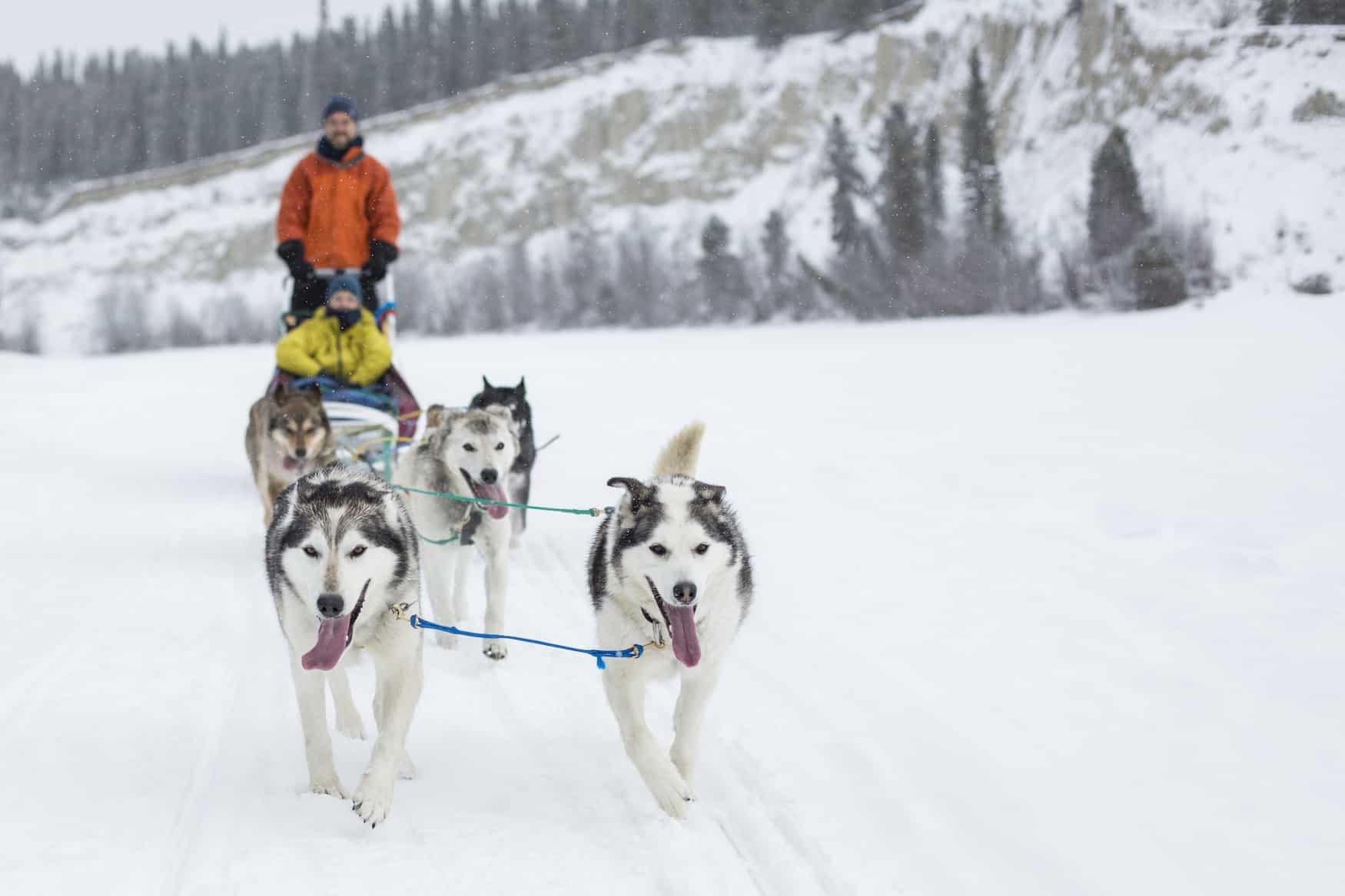 Muktuk Adventures Ranch Whitehorse Yukon