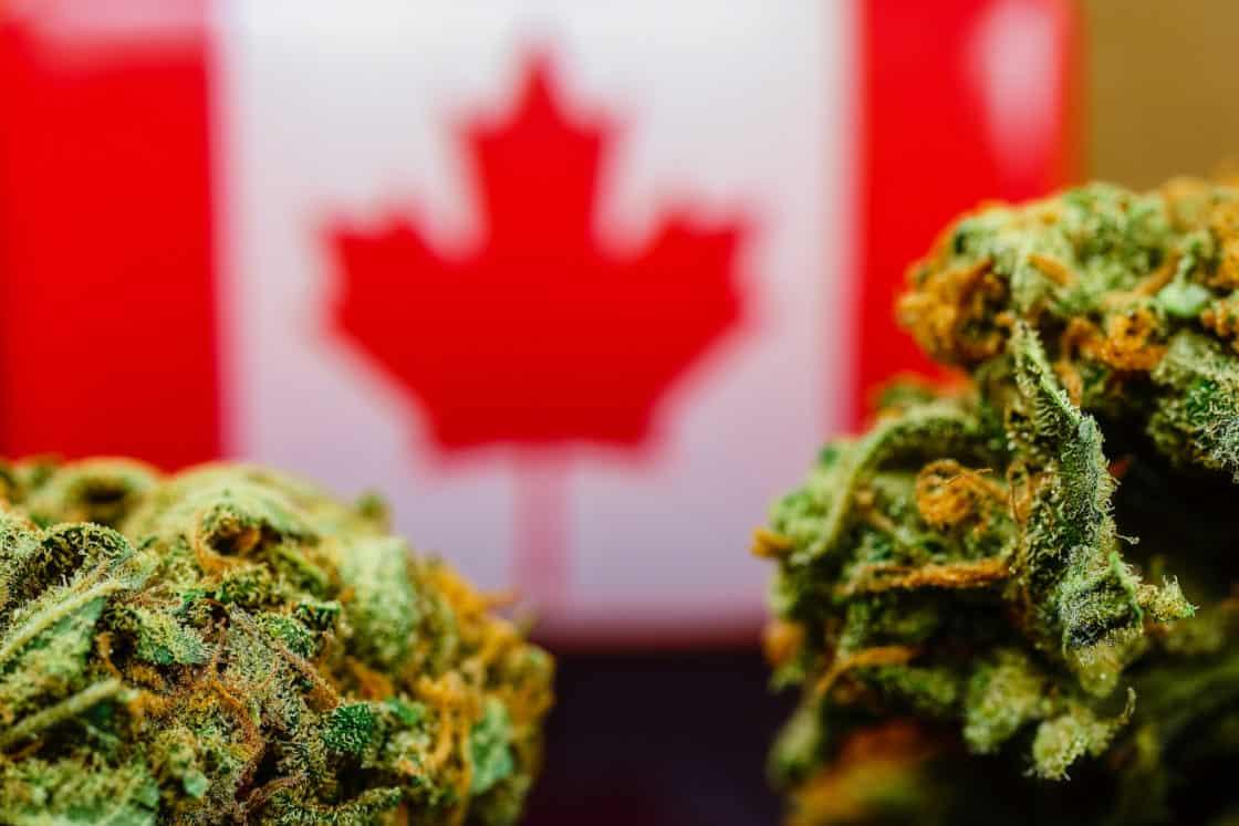 Cannabis mit Kanadaflagge im Hintergrund