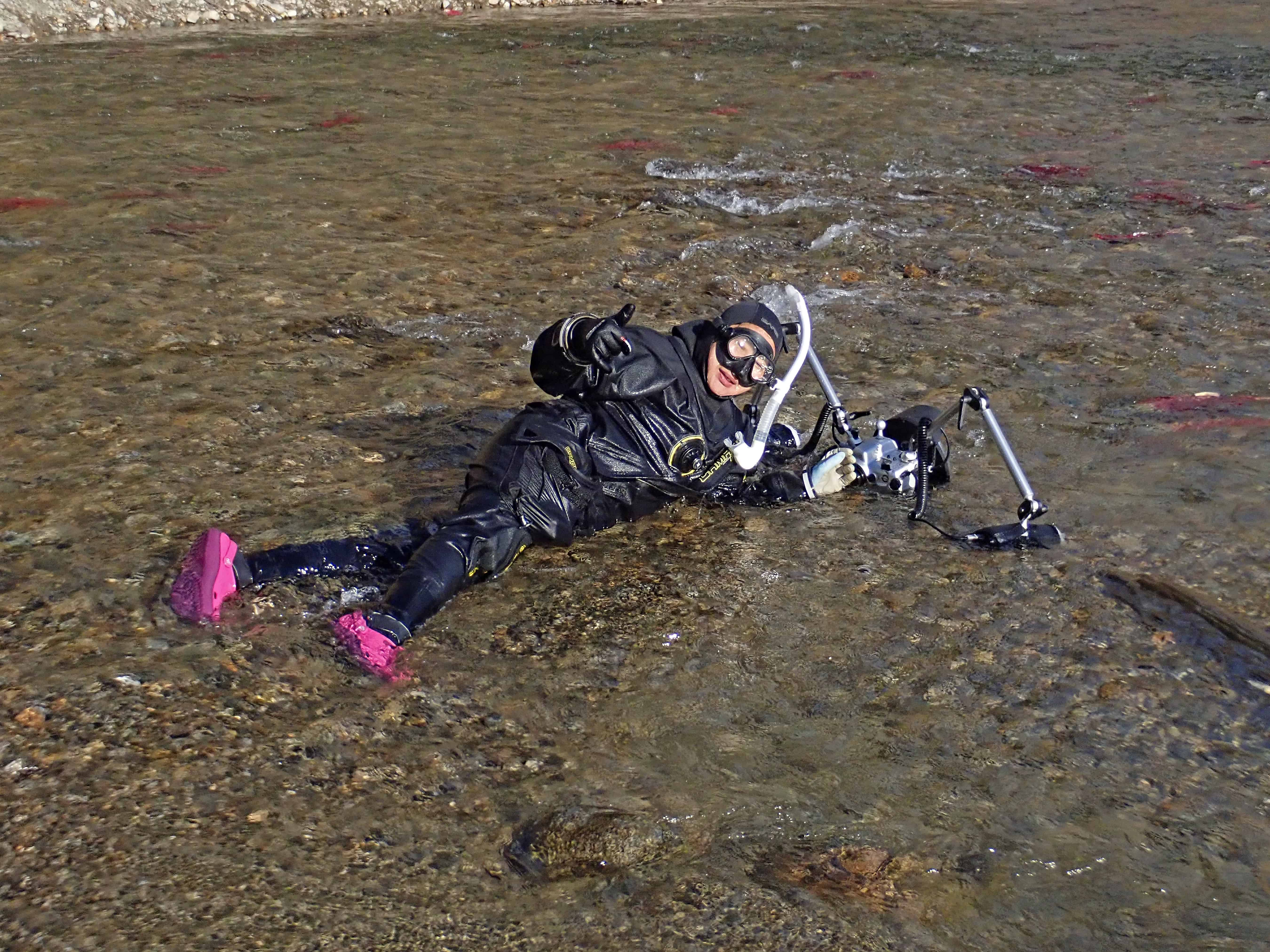 Trockentauchen im Adams River, BC, Kanada.